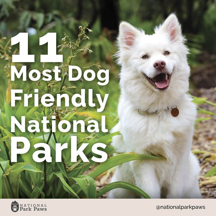 Buzzfeed list of the 11 most dog friendly national parks in America