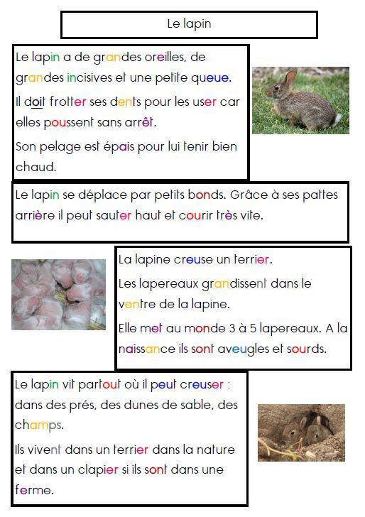 Top 25 ideas about activit s p ques au pr scolaire et au - Mon petit lapin s est cache dans le jardin paroles ...