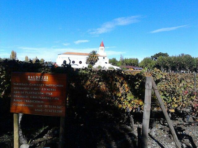 Viñero Balduzzi - Chile Mayo / 2015 Ubicado en San Javier,  en Valle del Maule.   Me gustó mucho la Arquitectura de sus locaciones ... y aunque no soy amante del vino, en la cata tuve la oportunidad de probar unos vinos muy buenos, especialmente el Chardenney.