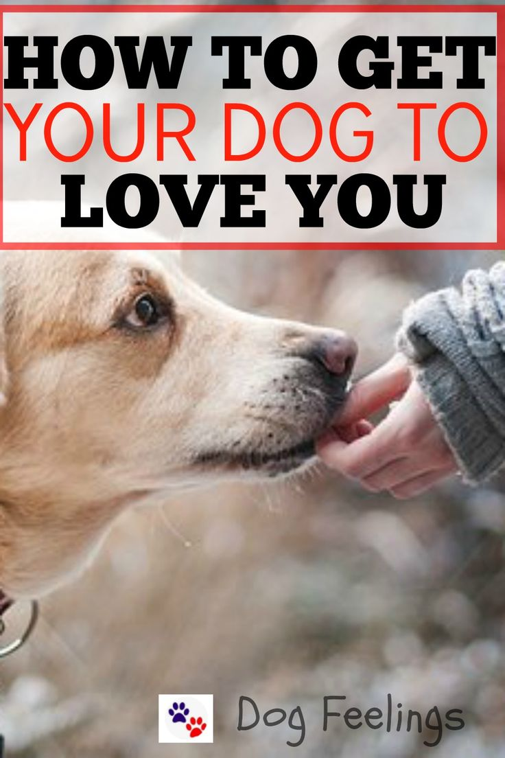 How To Get Your Dog To Love You!  https://dogfeelings.com/how-to-get-your-dog-to-love-you/
