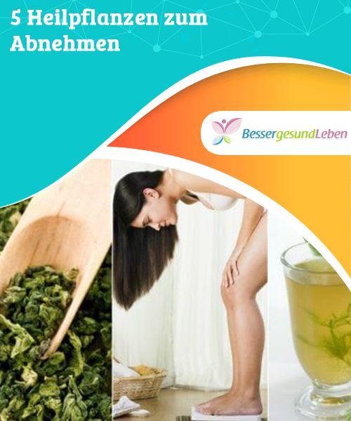 Rezepte zum Abnehmen mit Heilpflanzen
