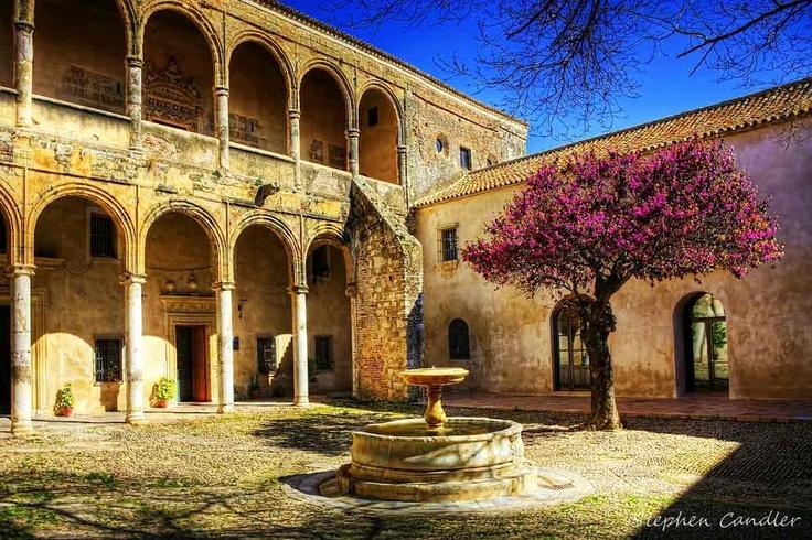 Judas tree in the courtyard of the Palacio de los Ribera, Bornos, Spain, by Stephen Candler