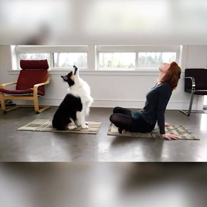 Doing some fun doga/exercises together😊💖  By: @my_aussie_gal