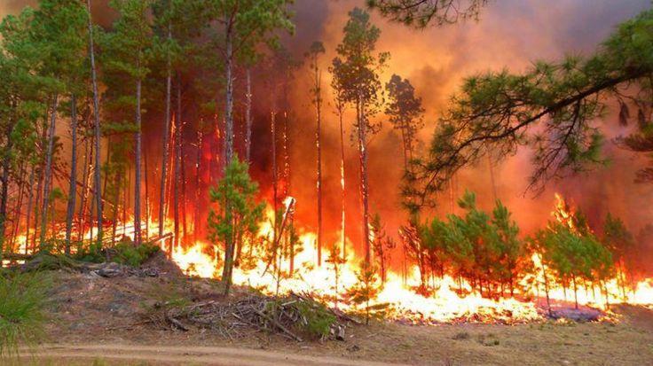 Explotaci n irracional de los recursos naturales sanchez for Partes de un vivero forestal
