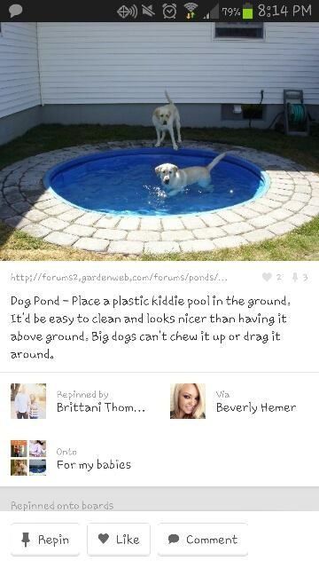 This is happening in the new house! Plastic in-ground doggie pool!!...even for babies-toddlers this would be prefect!!!!!! Oh my god I want one now  . And I bet it's cheap too