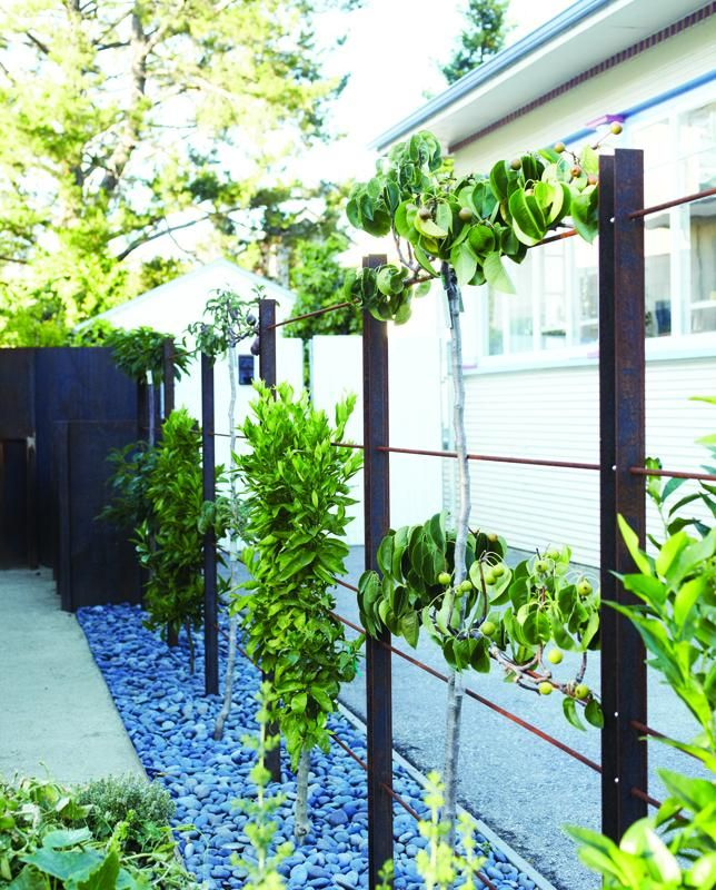 Espalier trees from The Beautiful Edible Garden