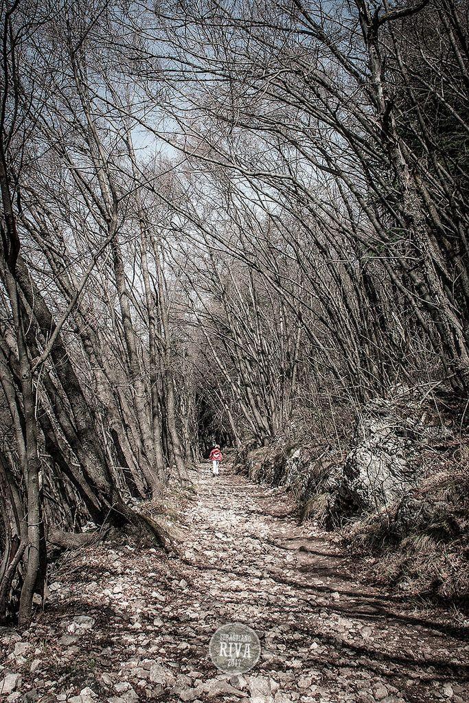 https://flic.kr/p/SWkbs7   TreesTunnel   Monte Orsa - Viggiù (VA) - Lombardia / March 2017