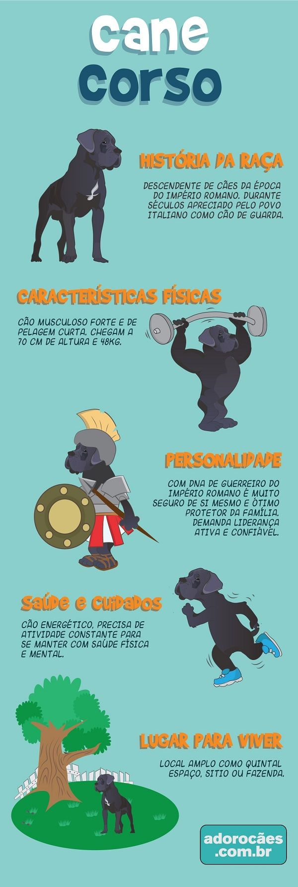 Cane Corso: história da raça, características físicas, personalidade, temperamento, saúde e cuidados, lugar para viver