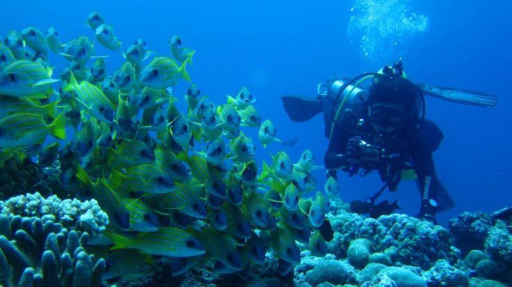 Le più belle barriere coralline del mondo, ecco i migliori posti per immersioni e snorkeling | Spiaggia.Piksun.com