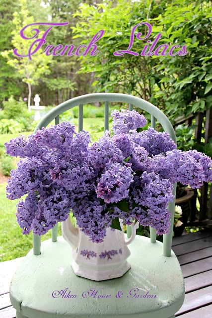 It's Lilac Season in our Garden