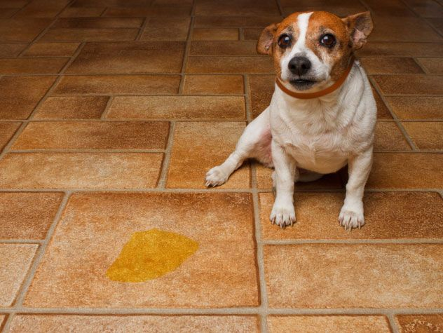Potty Plan: What To Do If Your Potty Training Fails - Petfinder