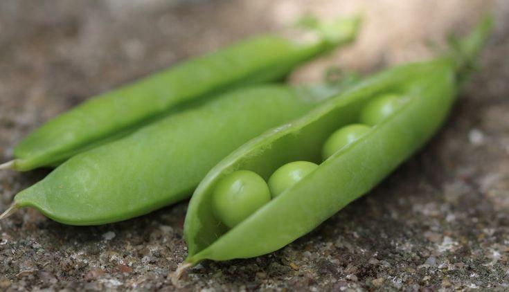 Erbsen: Anbau, Pflege und Ernte