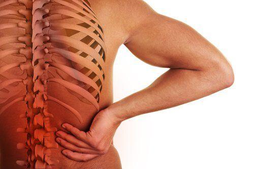 En este artículo te contamos cuál es la relación entre la columna vertebral y los órganos. Muchas enfermedades o emociones se enlazan entre si.