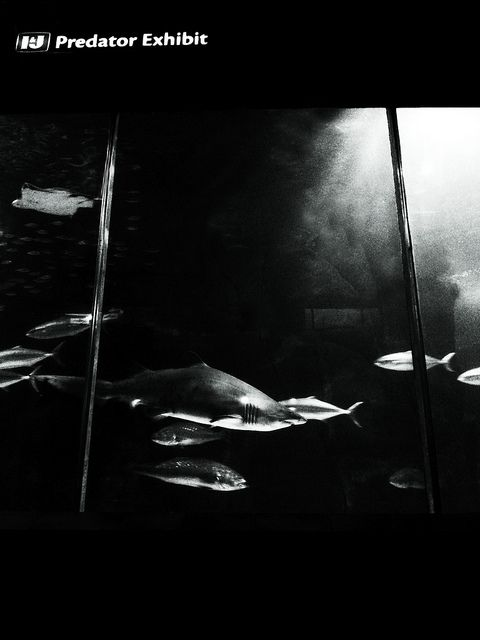 I&J Predator Exhibition | Flickr - Photo Sharing!