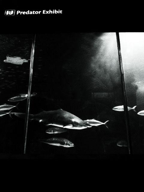 I&J Predator Exhibition   Flickr - Photo Sharing!