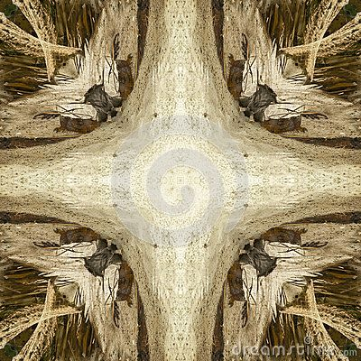 Square shape abstract photo with iguana theme