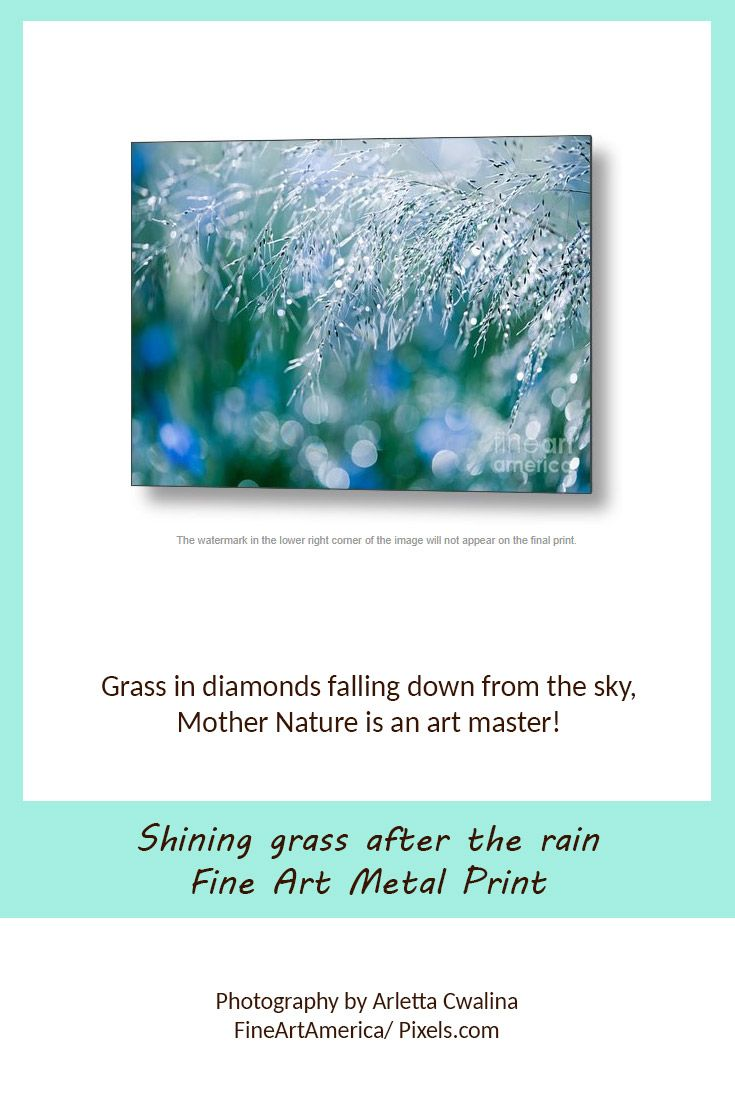 Gleaming grass after the rain, like diamonds falling down from the sky, fine art picture printed on metal print. Mother nature is an art master! Photography by Arletta Cwalina/ Fineartamerica. See more clothes and home decor ideas and if you love it, feel free to share, maybe your friends would like to have it too :) #homedecor #metalprint #diamonds #raindrops