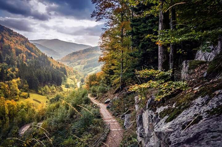 Zu dem Toddnauer Wasserfall Zwarte woud