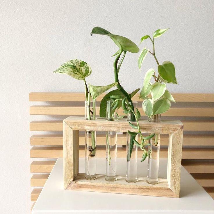 Propagation Station 4 Tubes en verre | Vases en verre – jardinière en bois suspendu avec boutures surprise inclus ! -Fait à la main ! Excellente idée de cadeau