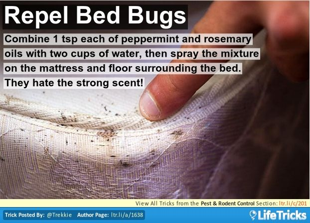 Pest U0026 Rodent Control   Repel Bed Bugs