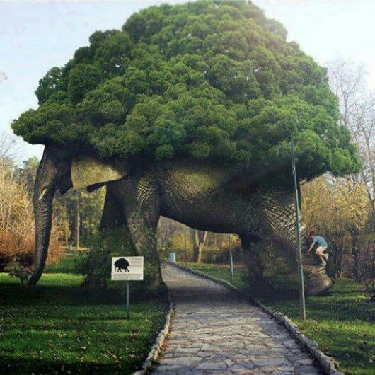 Elephant...Is this really a tree ?????