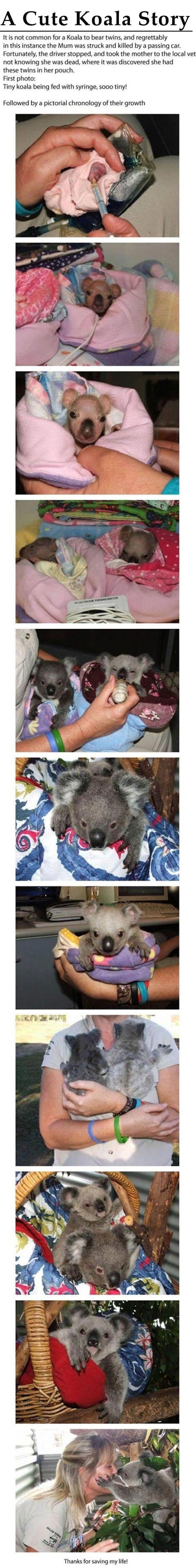 A Cute Koala Story cute animals adorable story animal baby animals koalas stories heart warming