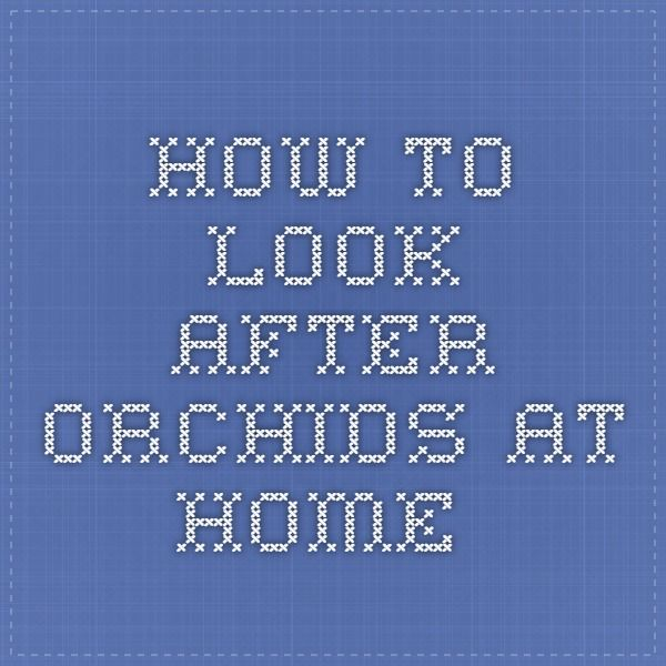 How to look after orchids at home.