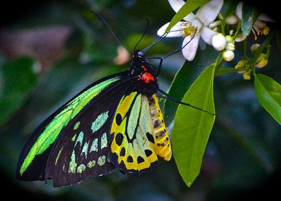 Butterfly Photography Nature Tropical by JenWatsonPhotography, $6.00