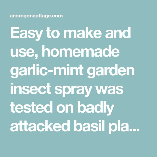 Homemade Garlic-Mint Garden Insect Spray (that Really
