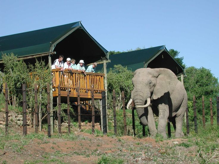 Addo Rest Camp - Eastern Cape See more on https://www.wheretostay.co.za/addo-rest-camp-game-reserve-accommodation-addo  Addo Rest Camp offers a wide variety of accommodation units to suit all tastes and plenty of activities to keep visitors busy. A unique feature is the waterhole lookout point, floodlit at night, within the camp as well as the underground hide, allowing close encounters with wildlife at the waterhole. The evenings are punctuated with the calls of lion, spotted hyena and…