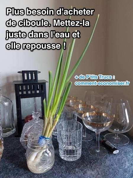 Que diriez-vous de pouvoir faire pousser de la ciboule chez vous à l'infini gratuitement ?  Découvrez l'astuce ici : http://www.comment-economiser.fr/n-achetez-plus-ciboule-mettez-la-dans-eau-elle-repousse.html?utm_content=buffer2f372&utm_medium=social&utm_source=pinterest.com&utm_campaign=buffer