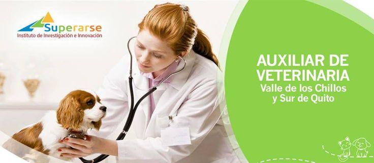 """Auxiliar de Veterinaria es un curso de capacitación que prepara al personal operativo de apoyo al médico veterinario para trabajo en clínicas veterinarias y en cuidado de animales de producción en campo. <a href=""""http://www.superarse.institute/auxiliar-de-veterinaria.html"""">Auxiliar Veterinaria</a>"""