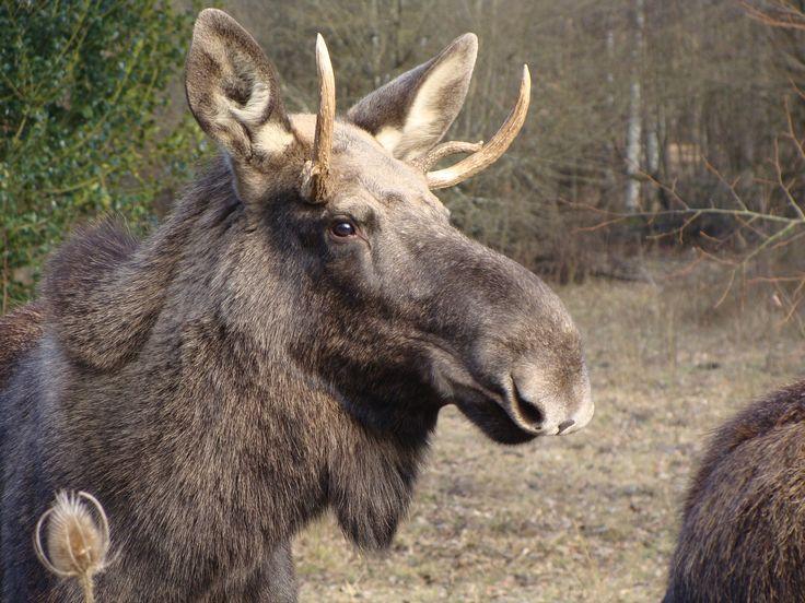 Découverte de l'Espace Faune de la Forêt d'Orient - Aube Champagne. Découverte des animaux d'hier et d'aujourd'hui au cœur d'un environnement naturel.