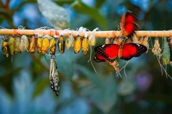 Kozasını terk eden tırtıl, kaderinin kelebek yazıldığını bilmez. Yani; gün doğmadan neleeer doğar.