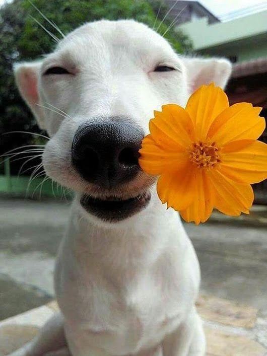 Una flor para ti💟🐕🌻😉😘🙌💖 - Lupita Arellano .
