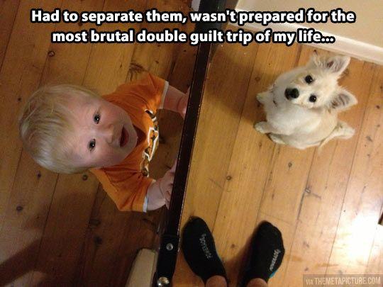 Babies and their doggies...don't you dare come between them! #animalhumor #babyhumor #babiesandpets