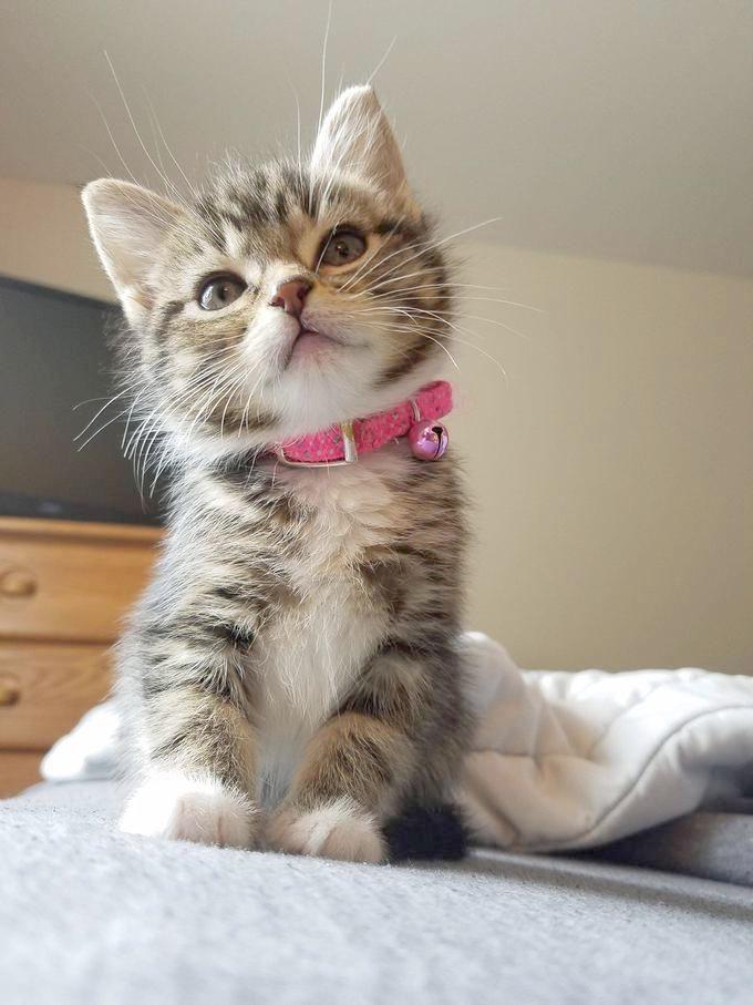 I Don T Do Rising And Shining Kittens Cutest Fluffy Kittens