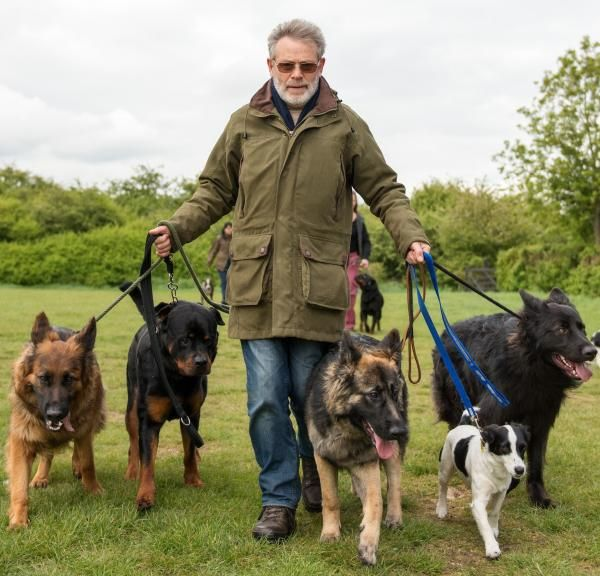 Não pode ser o seu cão a mandar em si, ele precisa de um líder! ;) #cachorros #cães #animais #pets