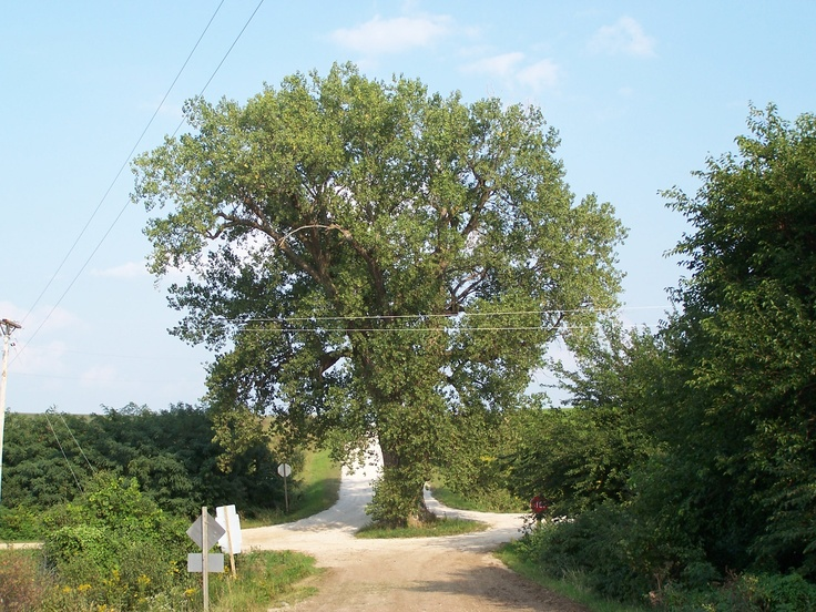 55 best images about trees of iowa on pinterest trees