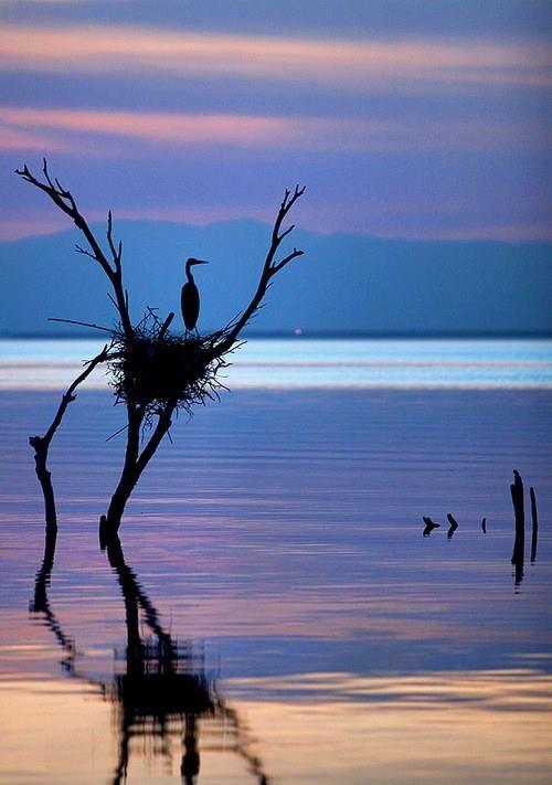 water bird in nest                                                                                                                                                                                 Plus