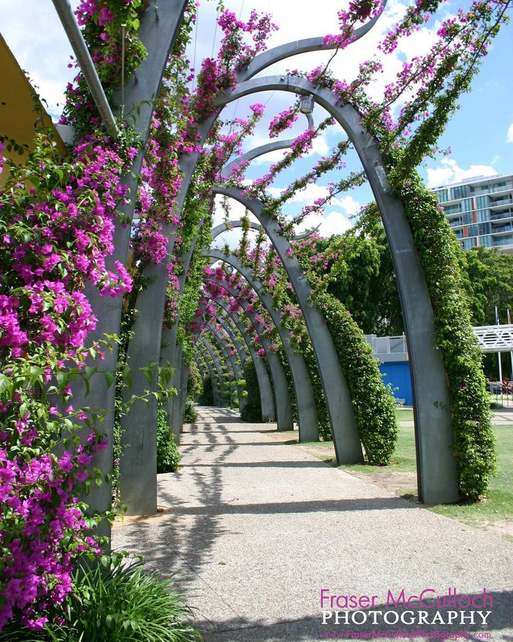 Walkway Through Brisbane's Southbank   Beautiful modern architecture and floral display in the heart of Brisbane.   #brisbane #southbank #queensland #australia #pink #flowers #modernart #contemporary #walkway #path #frasermccullochphotography