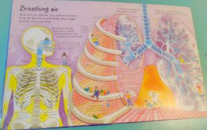 How to make a model lung #homeschool