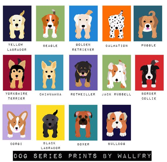 Puppies for wall prints