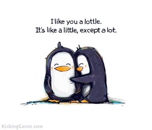 i like you a lottle. its like a little but a lot. #quote #cartoon #penguin #cute