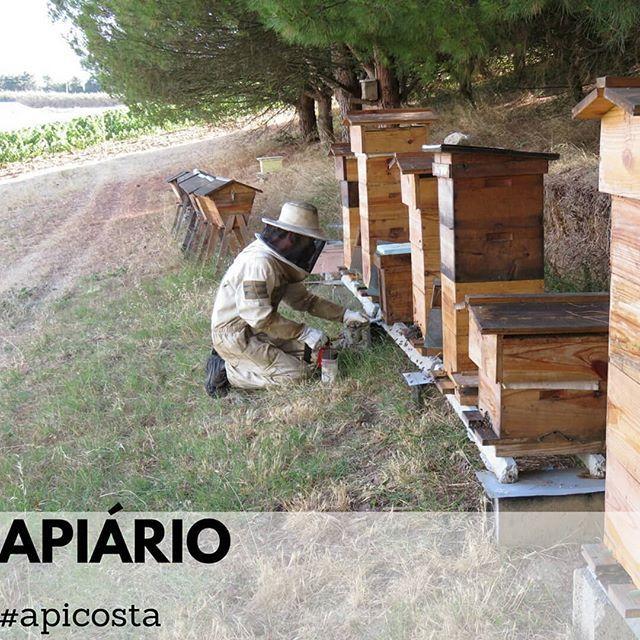 #apiculturanatural #apiculturaeficiente #apicultura #abelhas #colmeias #cera #mel #agricultura  #Regram via @apicosta