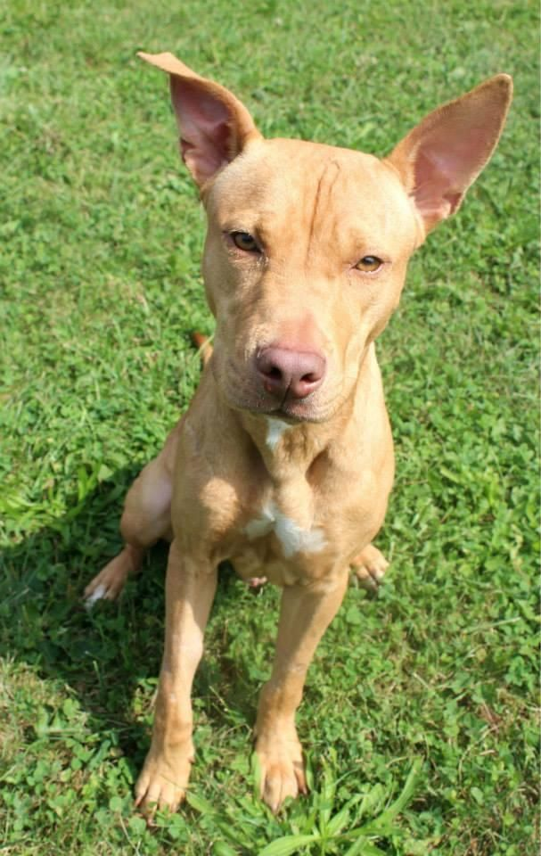 Lorain County Dog Kennel Petfinder