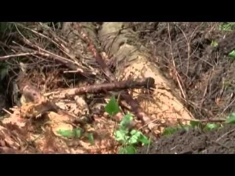 Permaculture : Culture sur butte   Méthode Philippe Forrer - YouTube