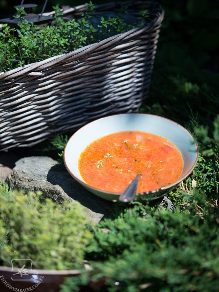 Zupa pomidorowa prosto z południowej Francji. - Klaudyna Hebda