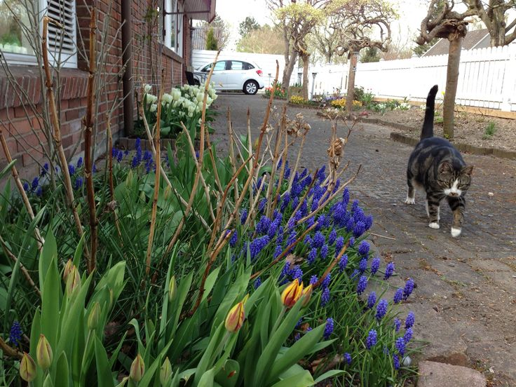 Spring and Sibelius the cat of the manor