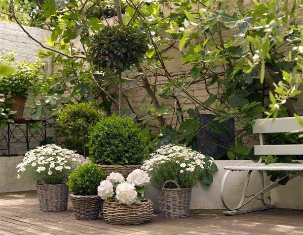 boxwoods and white flowers in baskets...